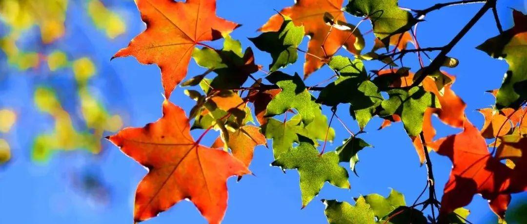 今日霜降!一转眼,秋天就要过去了……