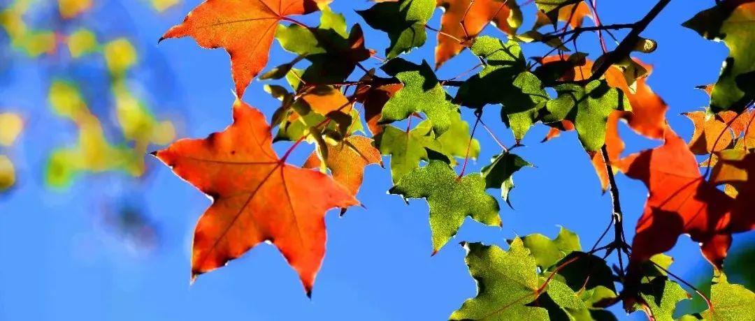 今日霜降丨一年好景最是橙黄橘绿时
