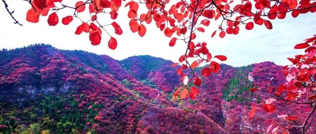 深秋青州正当红,十几处绝佳赏红叶之地等你来!